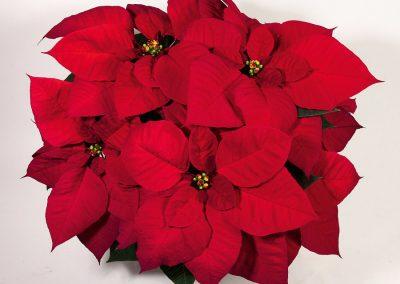 Christmas Eve_klein
