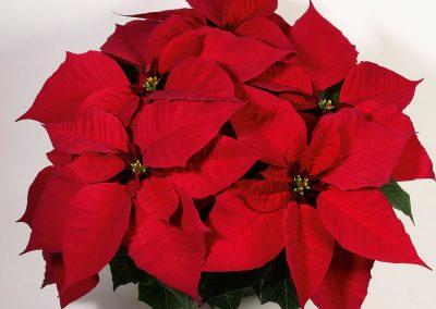 Christmas feelings red_klein